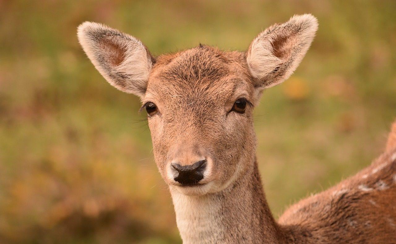 Deer on the Run!